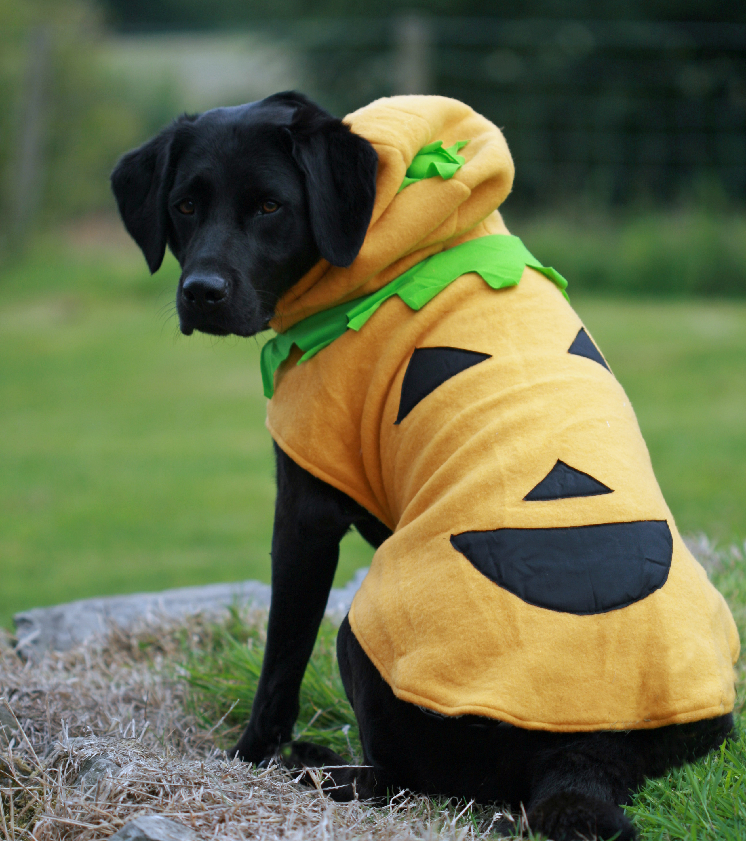 Halloween Costumes for Big Dog Breeds and Small Dog Breeds